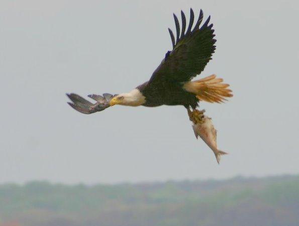 Eagle4paradigms